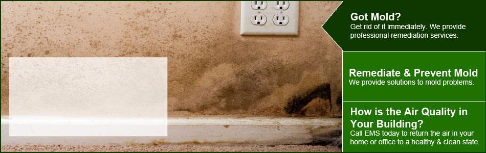 Got Mold? Get rid of it immediately. We provide professional remediation services.