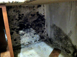 Mold in Kitchen | Mold Caused by Flood | Indoor Mold | Remove Mold | Toxic Mold