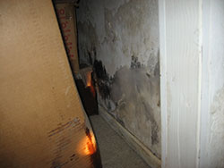 Indoor Mold | Mold Remediation | Mold Removal