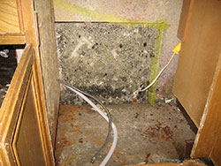 Kitchen Mold Removal | Indoor Mold | EMS | Environmental Management Solutions Inc | Remove Mold