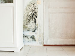 Mold on Wall | EMS Mold Removal & Mold Remediation | Inland Empire of Southern California